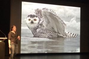 Audrey Robillard étudie la migration du harfang des neige