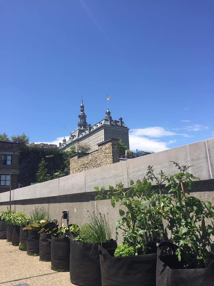 Une équipe d'employés entretient sur ses temps libres des jardins communautaires sur les toits du Musée.