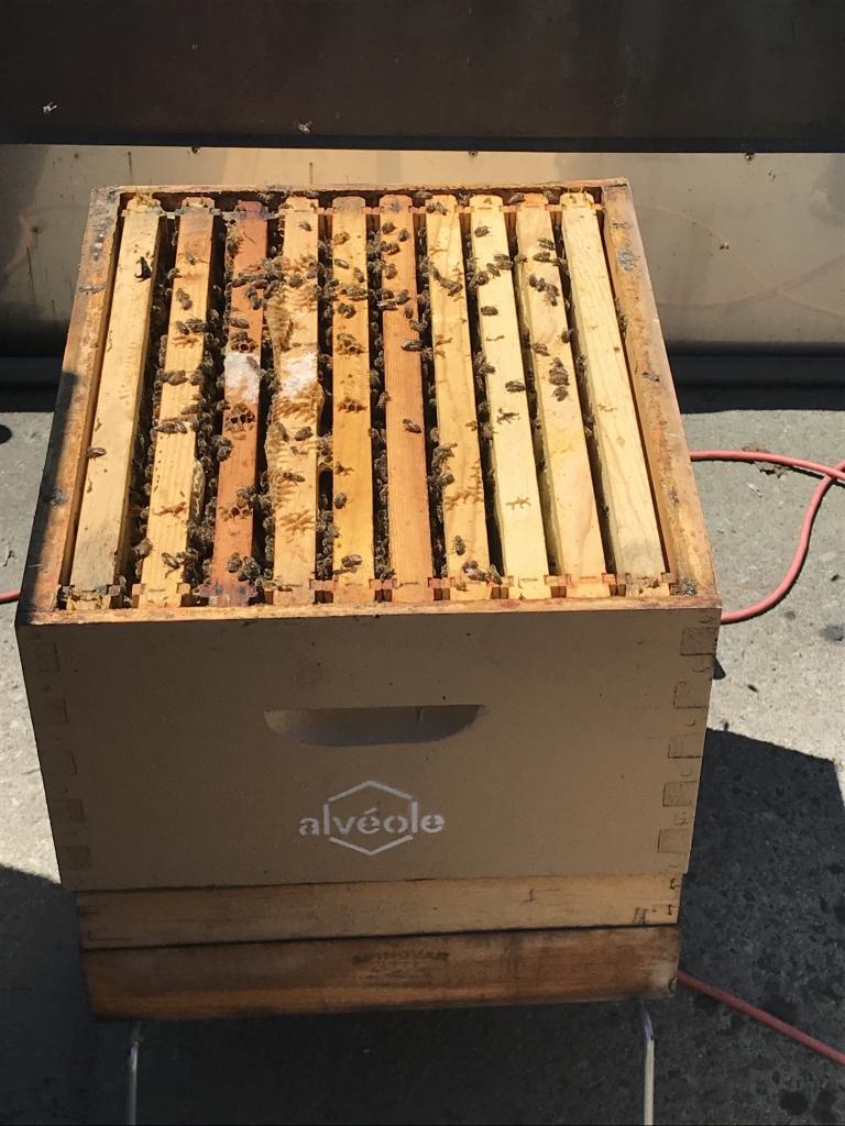 Des ruches de l'organisation Alvéole ont été installées sur les toits du Musée.