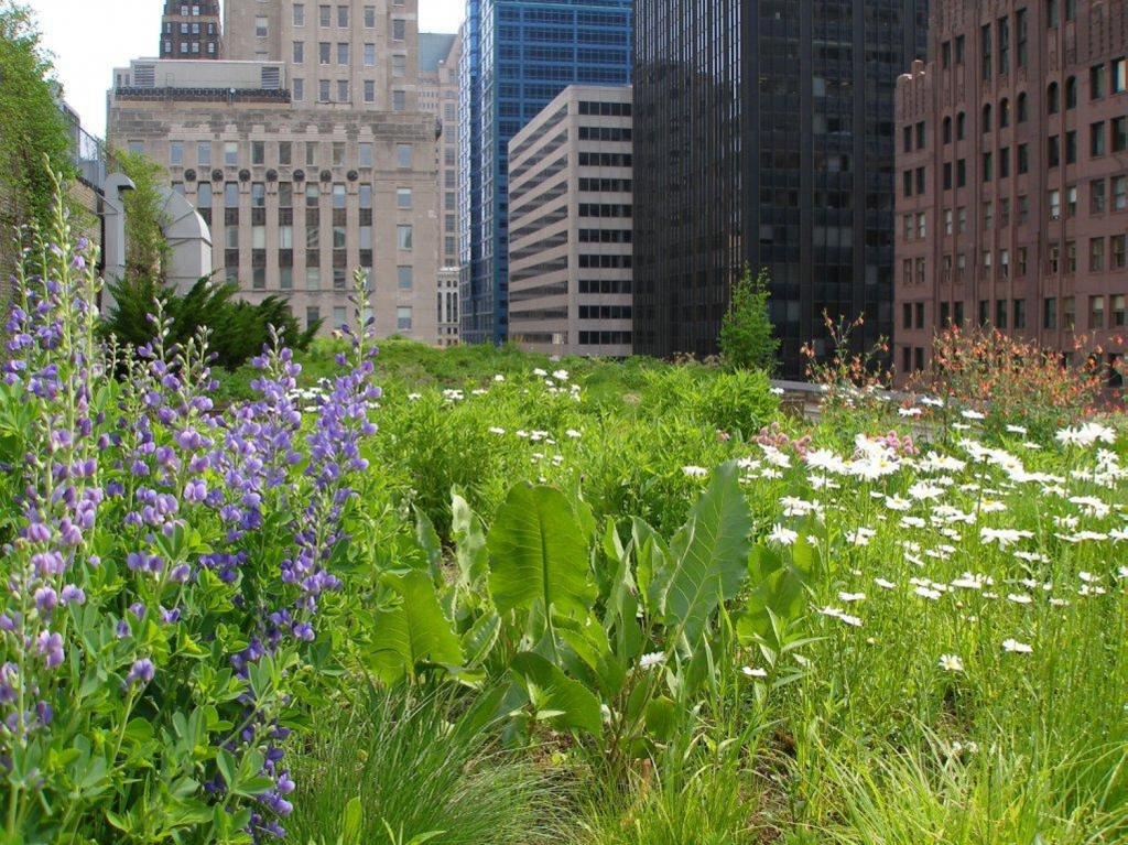 Photographie d'un toit vert à Chicago montrant une végétation proliférante
